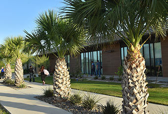 Students walking outside by palm trees